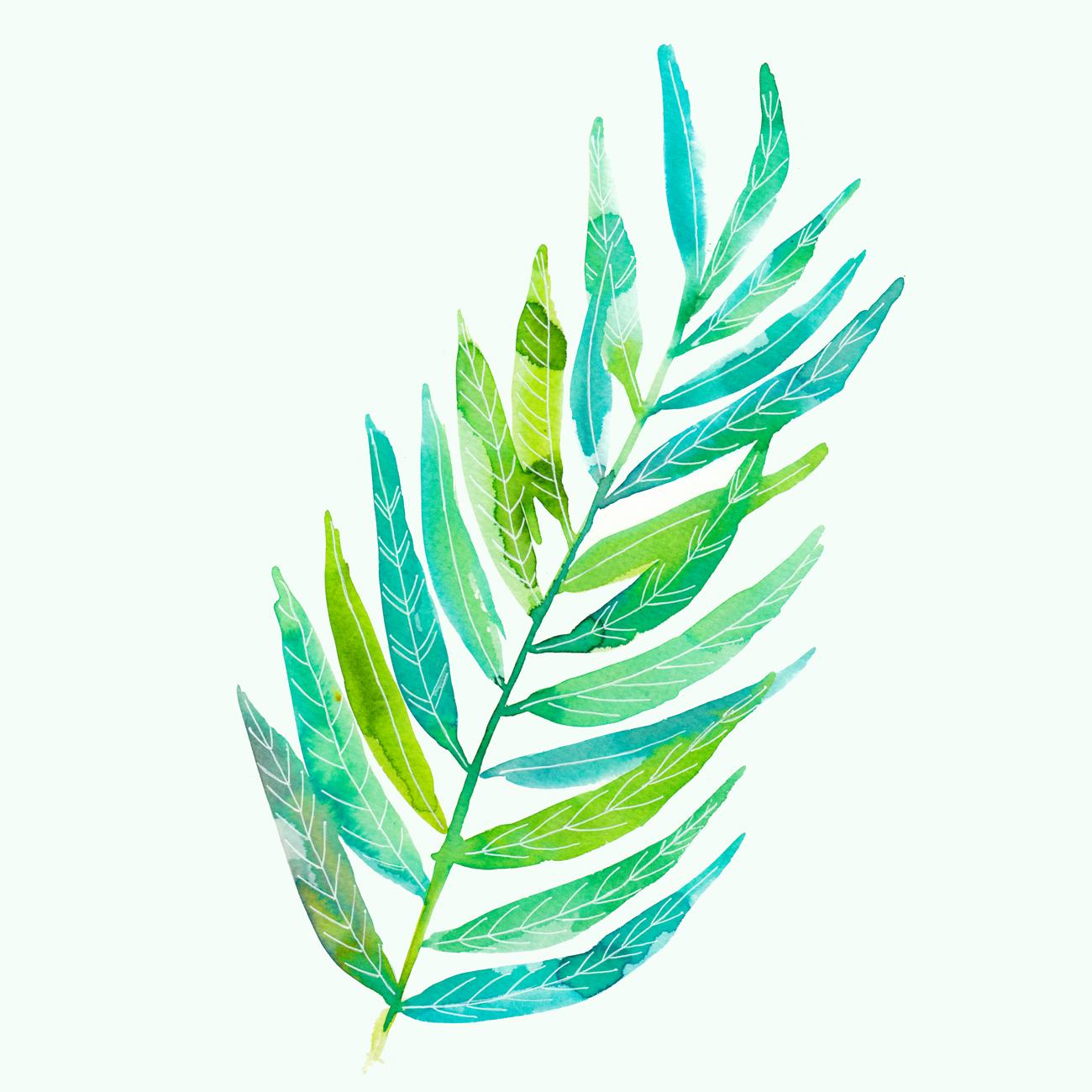 botanische illustratie blad waterverf Petra van Dreumel